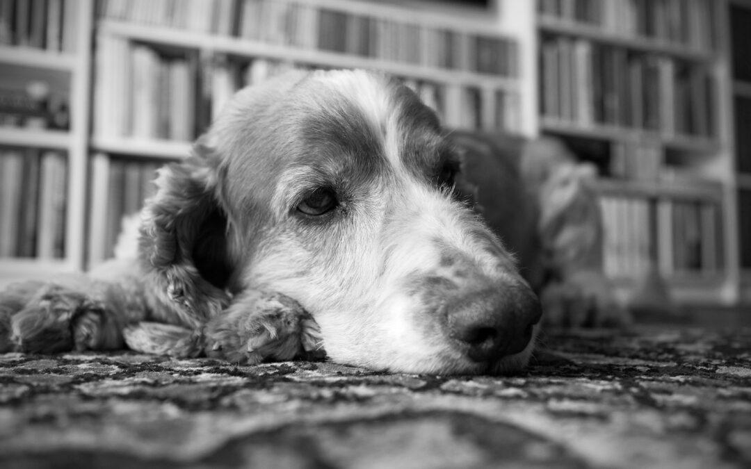 """Bostadskrisen: """"Fel att 20 hundägare kan stoppa viktigt bostadsbyggande"""""""